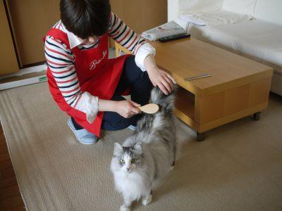 猫のお世話風景
