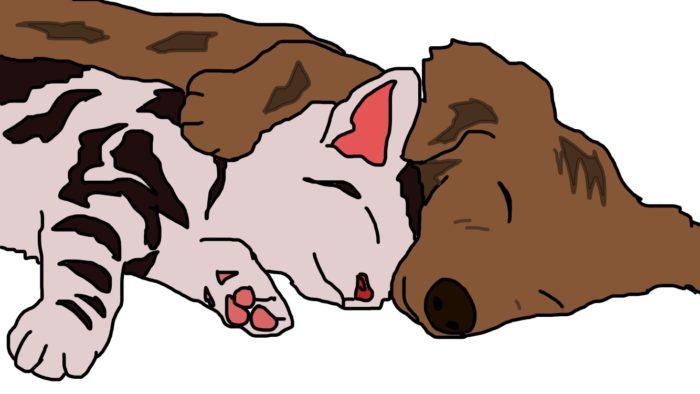 犬や猫の睡眠時間 ペットシッターsos 全国展開のペットシッター